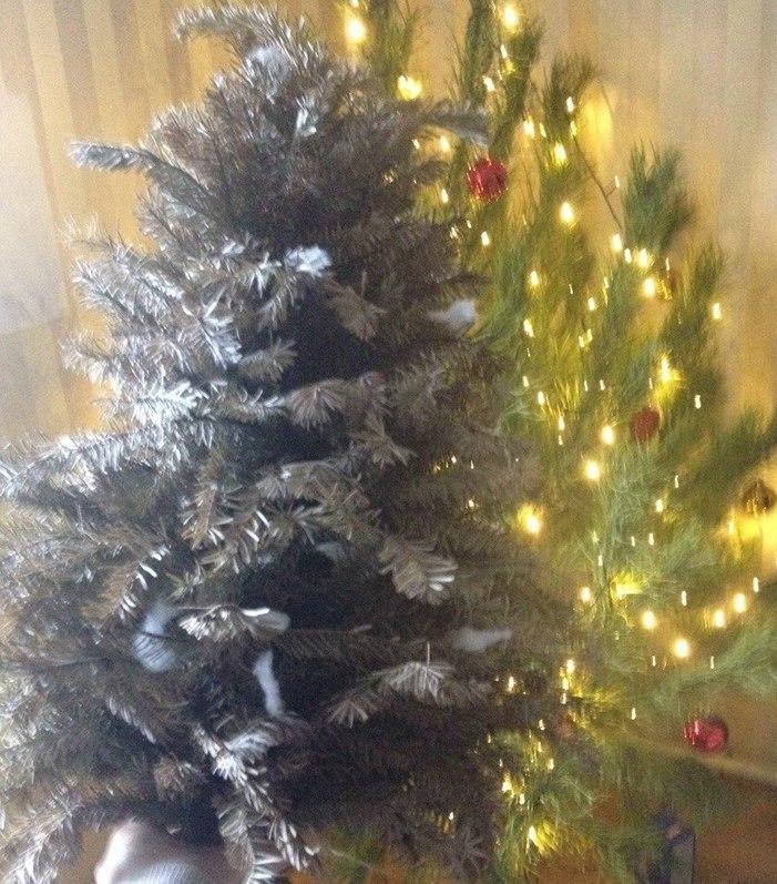 Новый рекорд: одесситка выбросила прошлогоднюю елку 30 декабря