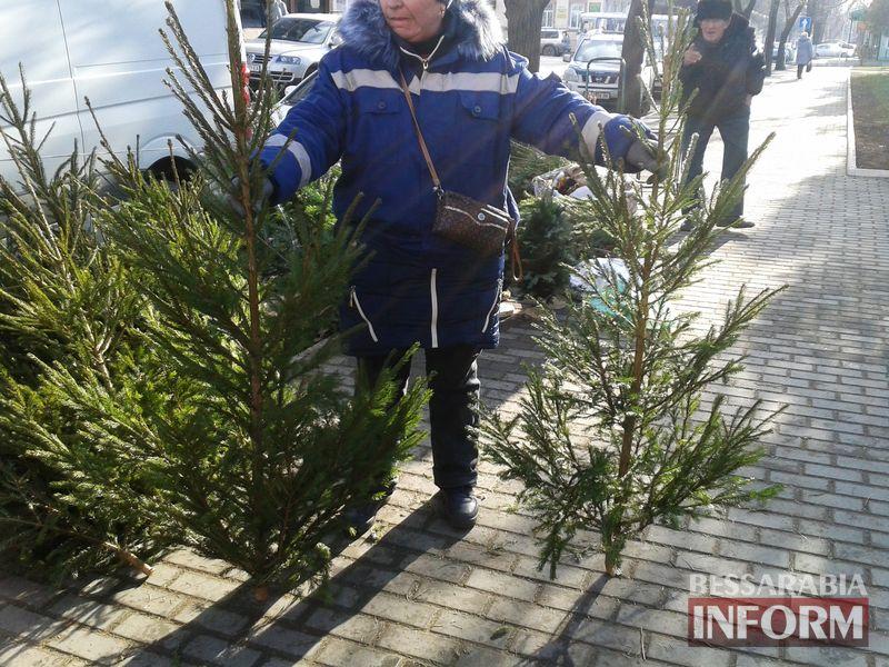 elka-150 Измаильчане не спешат покупать елки и сосны - цены кусаются (фото)