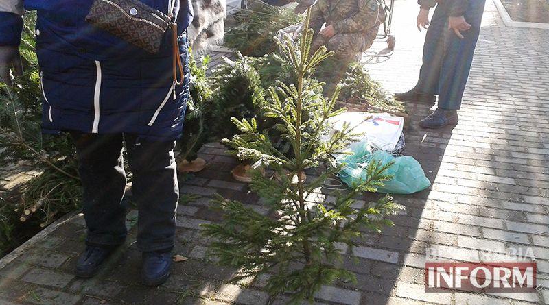 elka-50 Измаильчане не спешат покупать елки и сосны - цены кусаются (фото)