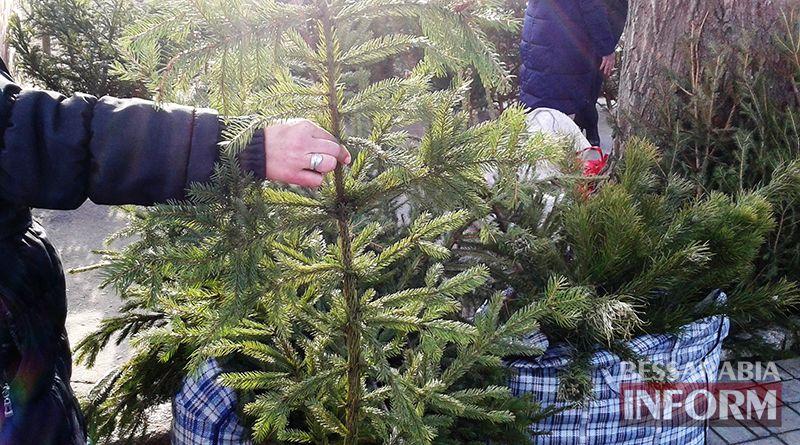 Измаильчане не спешат покупать елки и сосны - цены кусаются (фото)