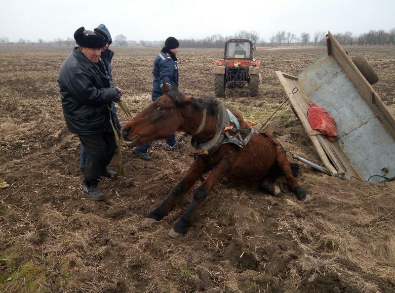 В Саратском районе спасали лошадь из дренажного колодца