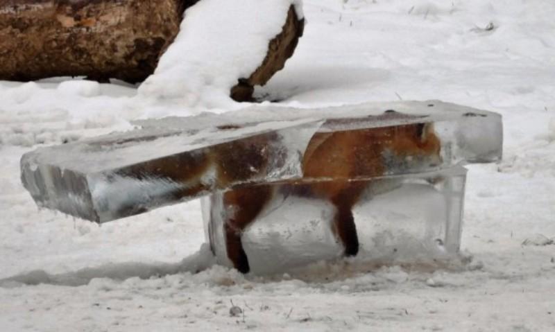 Зимний Дунай: в Германии в лед вмерзла лиса, а в Румынии целый корабль