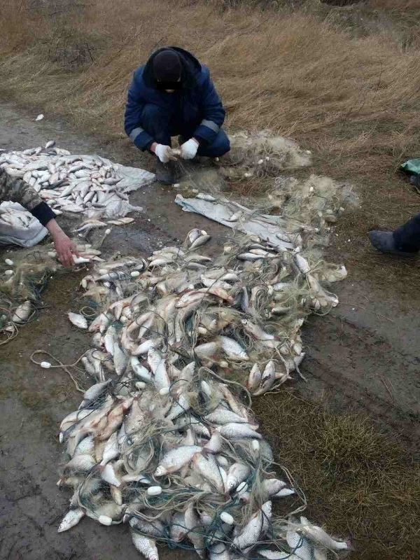 IMG-20170302-WA0006 Пограничники поймали на канале Дунай-Сасык браконьеров с уловом на сумму почти 100 тыс грн