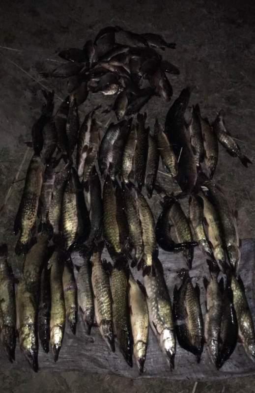 Готовился к 8 Марта: в Ренийском районе пограничники поймали браконьера с мешком ондатр