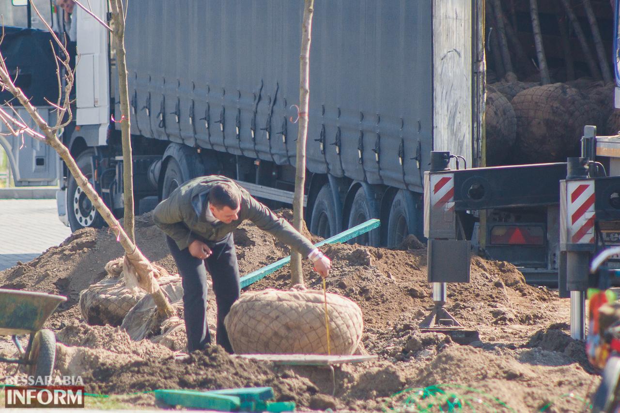 Кленовая аллея и сакуровый сад: в Измаиле приступили к высадке взрослых саженцев