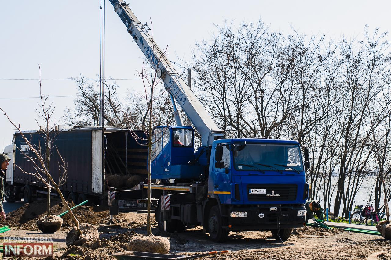 SME_7696 Кленовая аллея и сакуровый сад: в Измаиле приступили к высадке взрослых саженцев