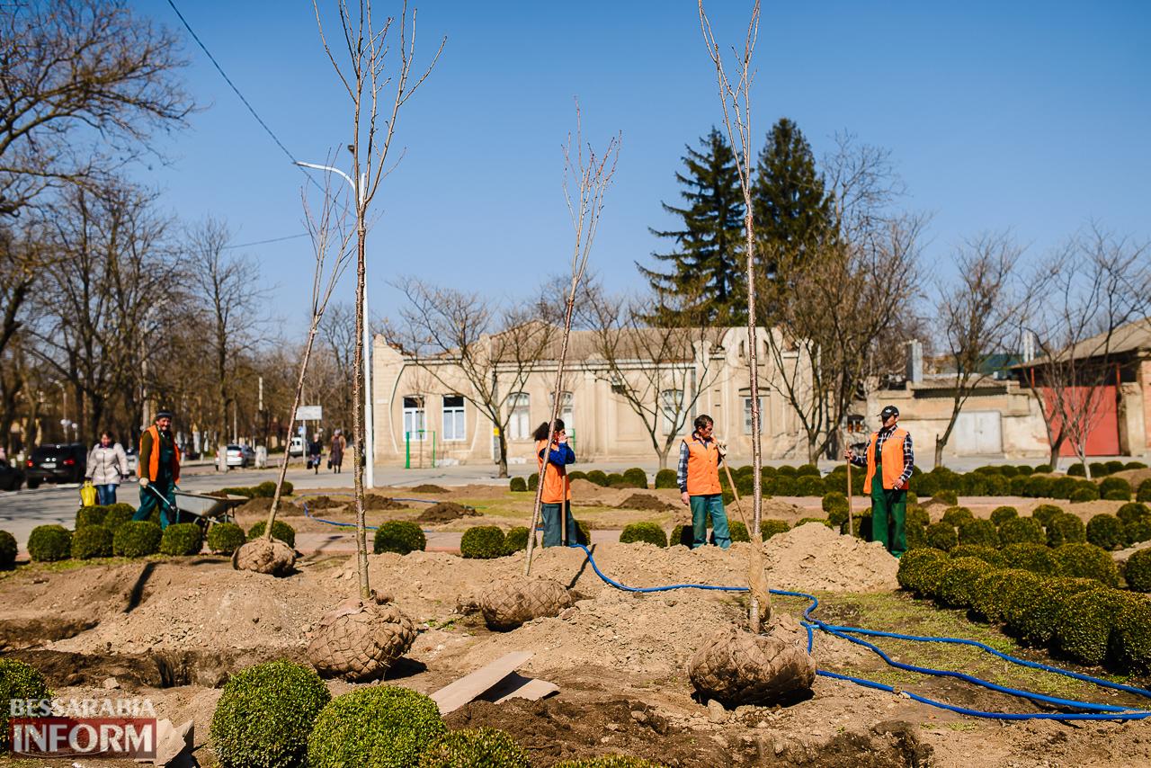 SME_7986 Кленовая аллея и сакуровый сад: в Измаиле приступили к высадке взрослых саженцев