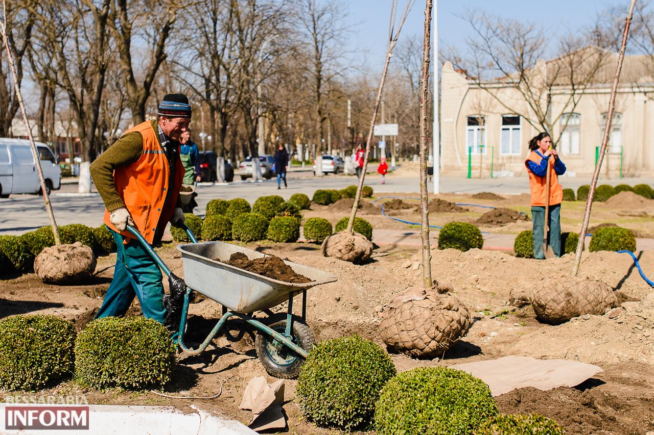 SME_7988 Кленовая аллея и сакуровый сад: в Измаиле приступили к высадке взрослых саженцев