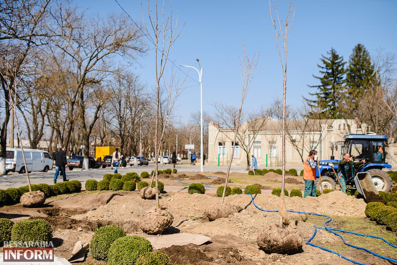 SME_7996 Кленовая аллея и сакуровый сад: в Измаиле приступили к высадке взрослых саженцев