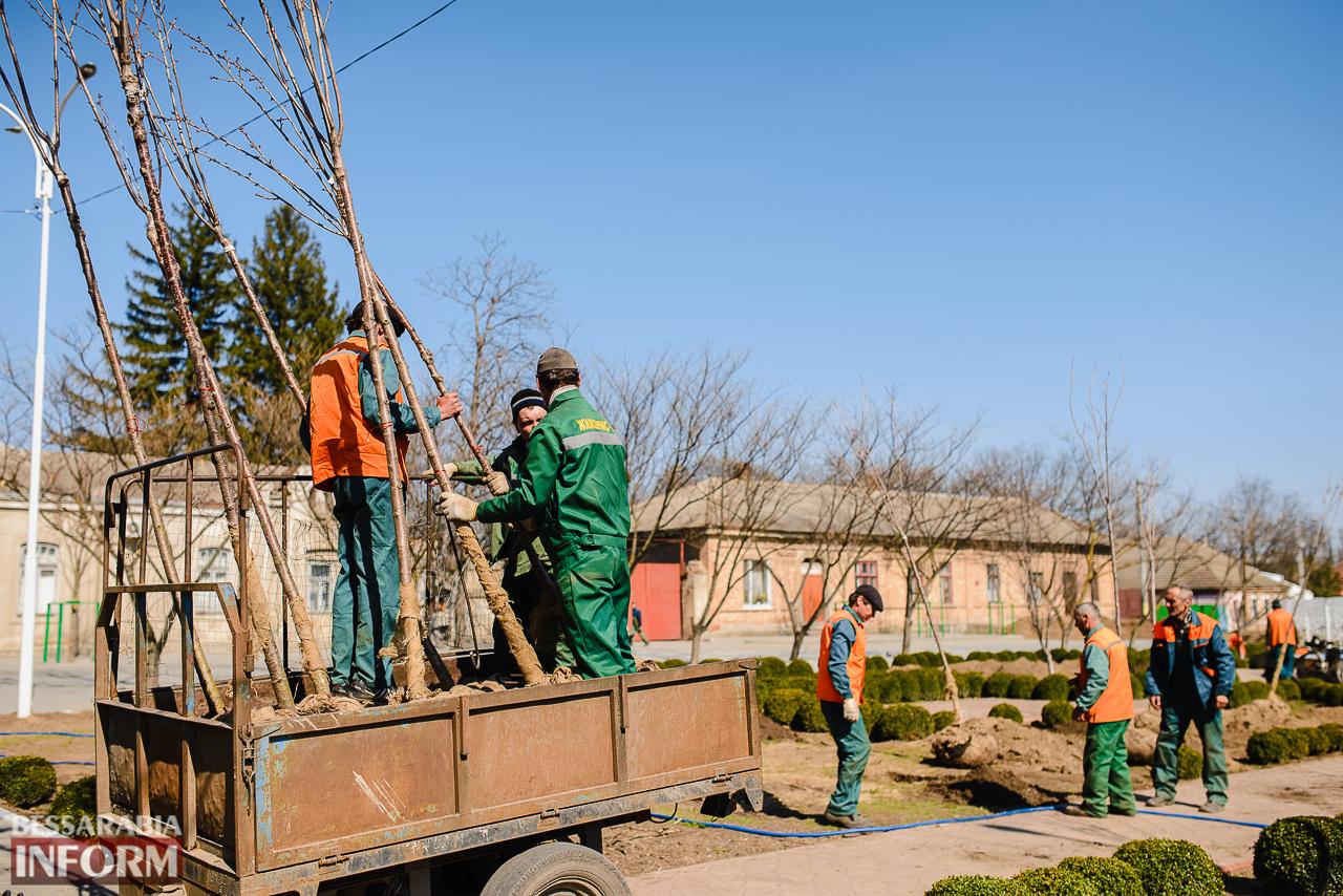 SME_8004 Кленовая аллея и сакуровый сад: в Измаиле приступили к высадке взрослых саженцев