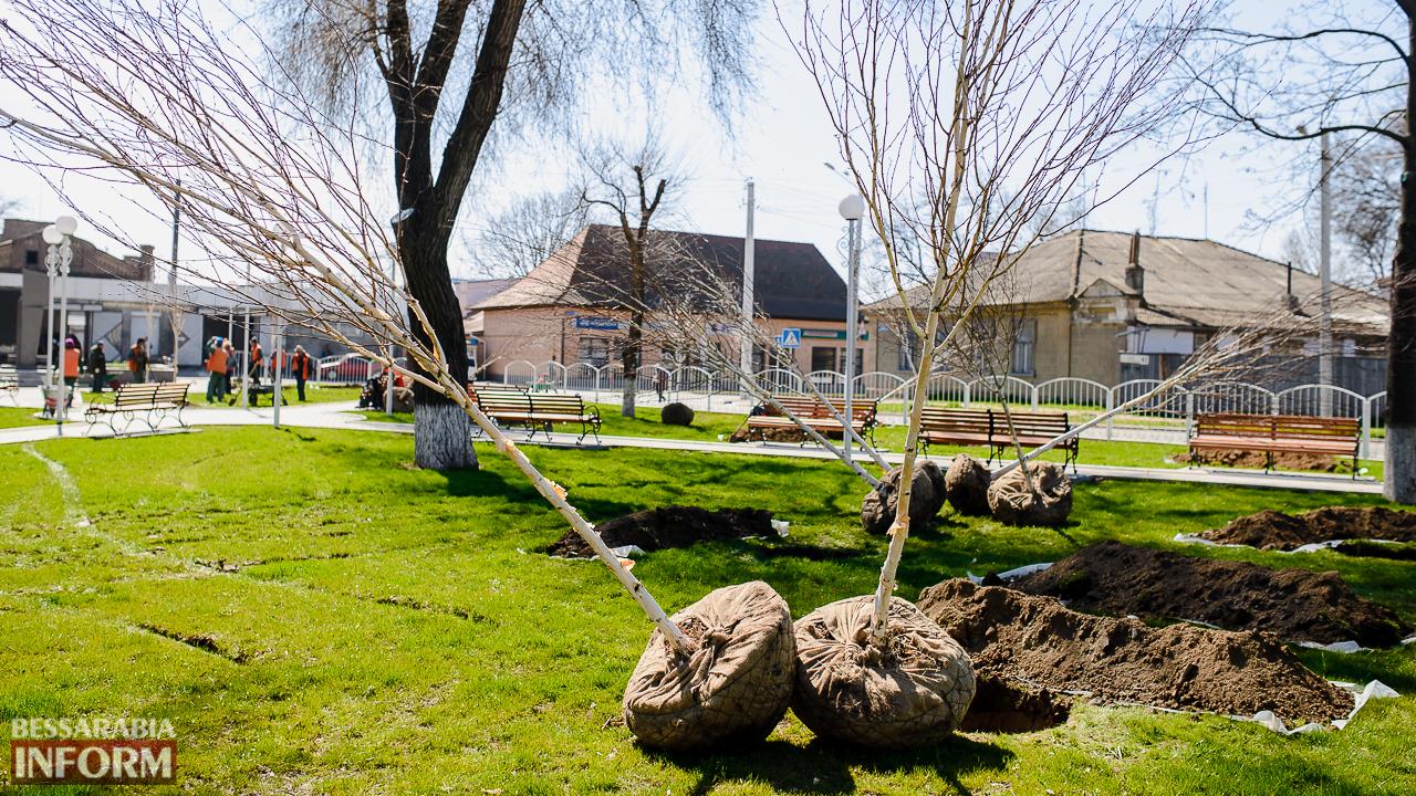 Сегодня продолжилось масштабное озеленение Измаила