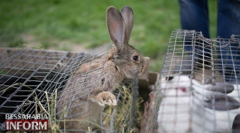 кролик с выставки домашних животных в Измаиле