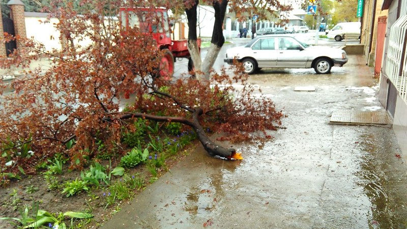 В Измаиле из-за шквального ветра ветки падают прямо на автомобили