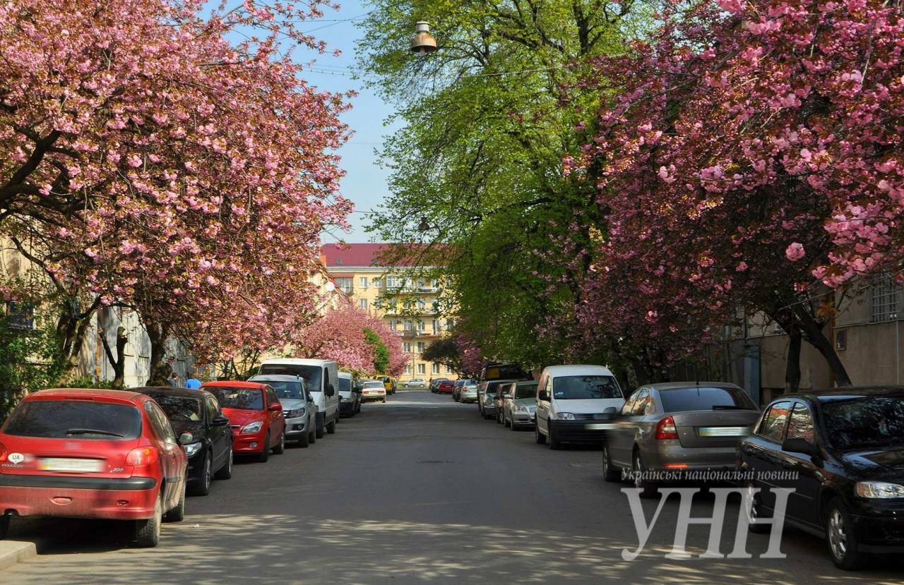34c4155bd551cf74545accb779fb4713293cb490 Как цветут сакуры в Ужгороде