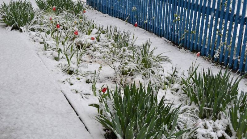 Artsiz-v-aprele Арциз заметает снегом