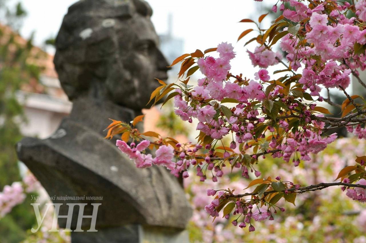 fd71ce8fb0ce7ad4c27a87feaed47c9c65258d92 Как цветут сакуры в Ужгороде