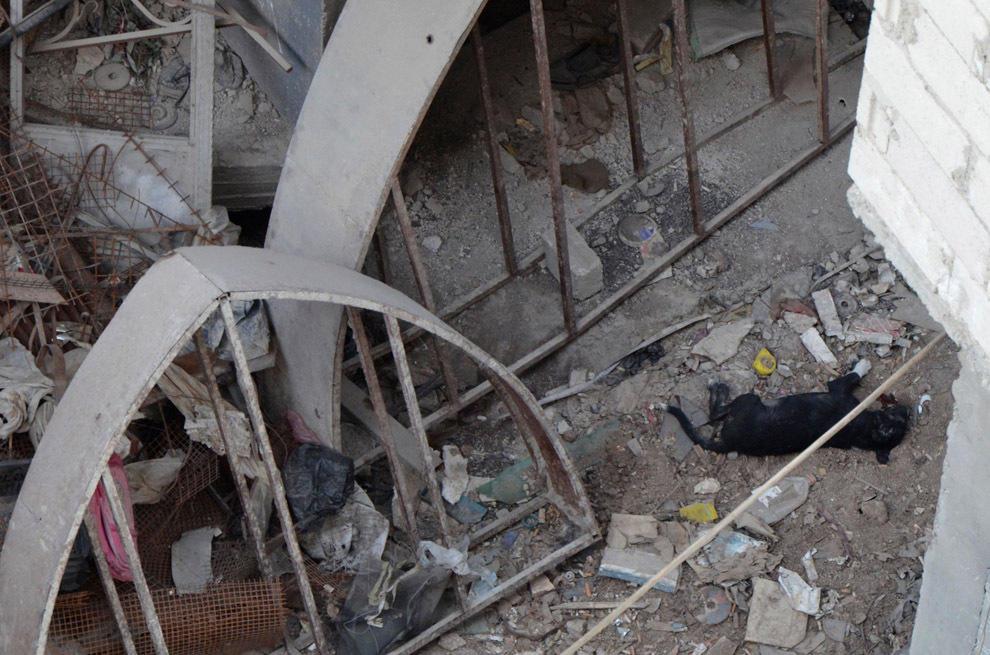 gazsiria07 В Сирии от газовой атаки погибло более 100 человек (фото, видео +18)
