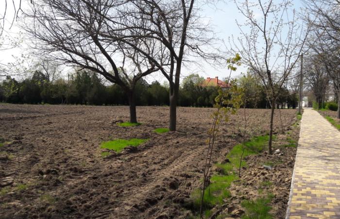 mesto-dlya-dubovogo-parka Не сакуры, но тоже хорошо: в Болграде решили высадить дубовый парк
