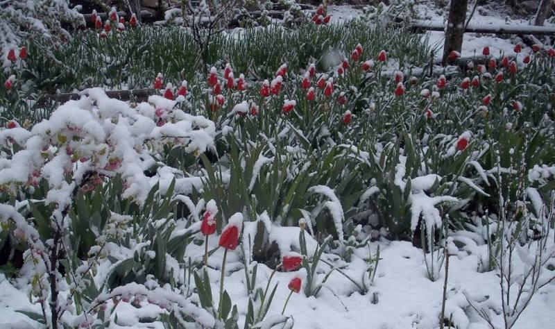 снег в апреле-3