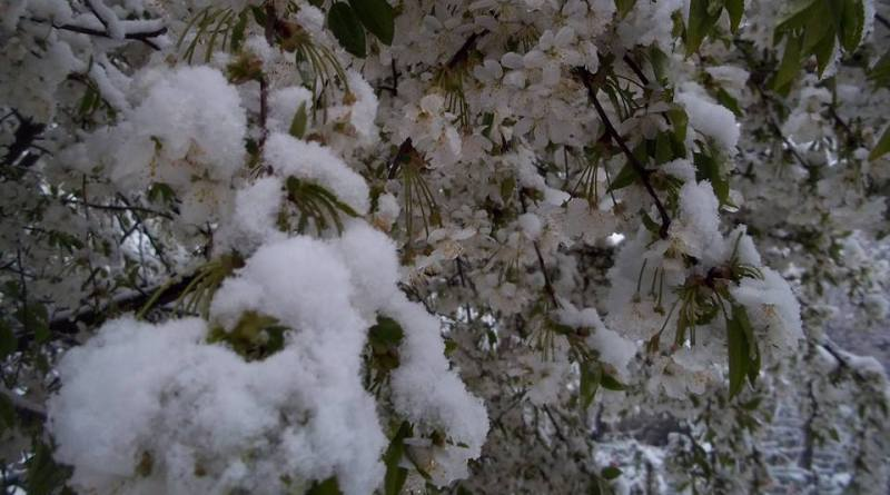 снег в апреле - 4