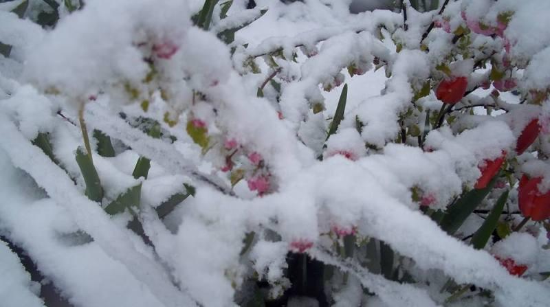 снег в апреле - 6