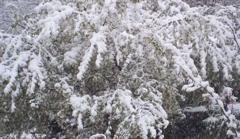 снег в апреле -7