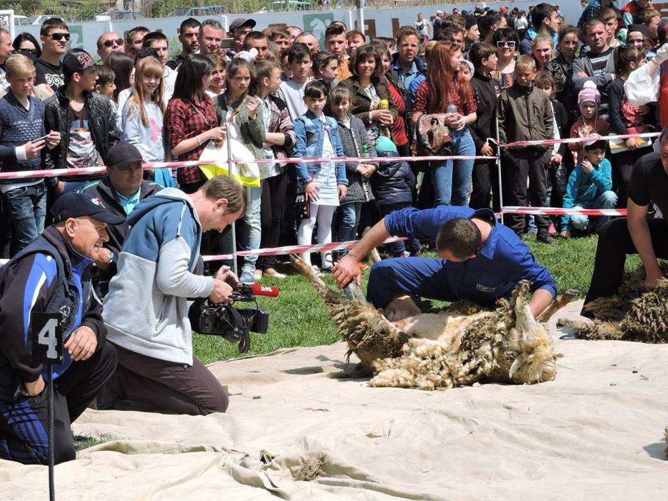 18198430_592527004459592_1858445367058925326_n В Арцизском районе состоялся первый в Украине чемпионат по стрижке овец