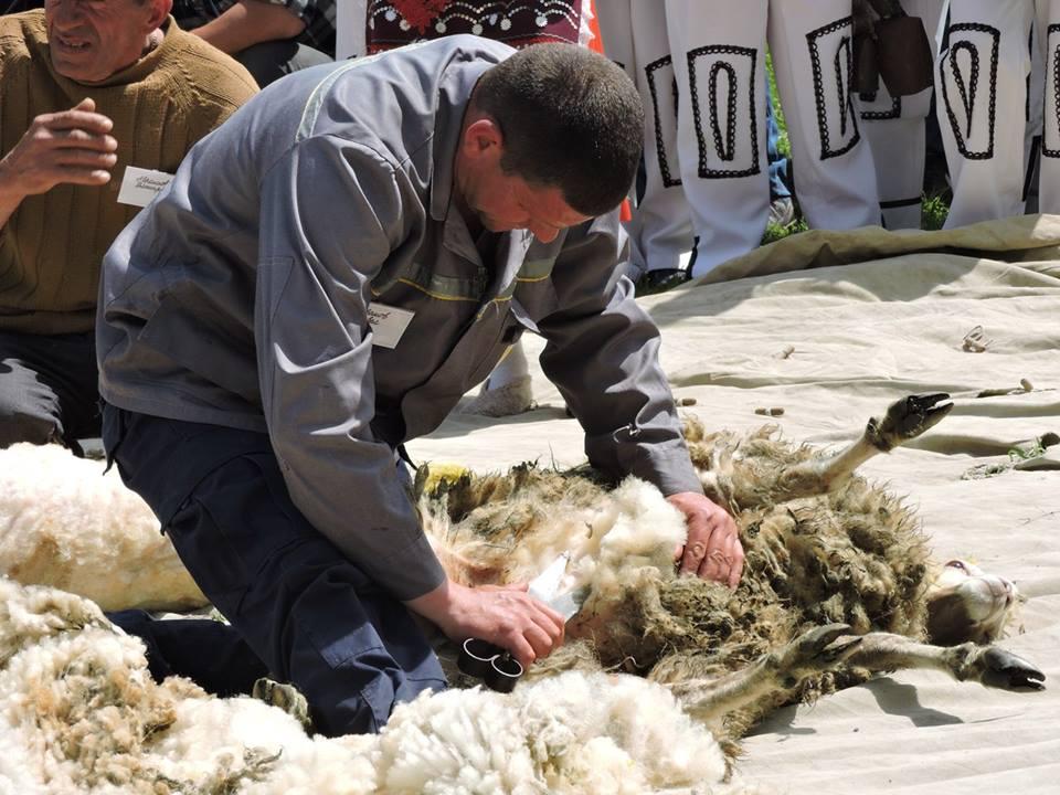 18222706_592526917792934_8493498380111347083_n В Арцизском районе состоялся первый в Украине чемпионат по стрижке овец