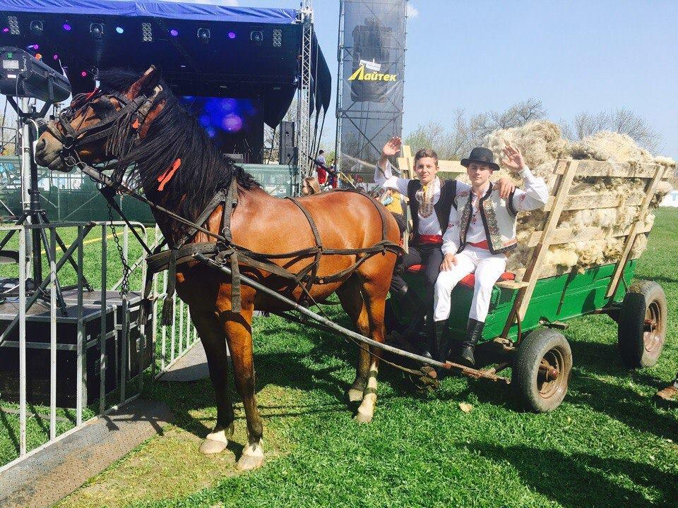 18274989_592527014459591_6646522042404052642_n В Арцизском районе состоялся первый в Украине чемпионат по стрижке овец