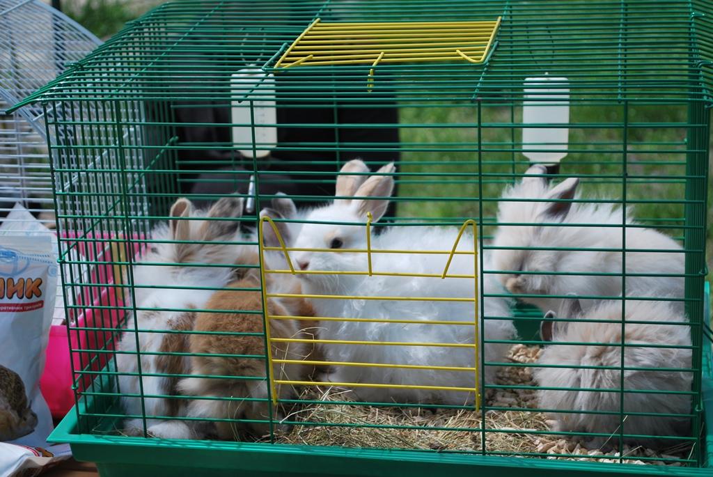 Лучший семейный отдых: в Измаиле прошла традиционная выставка-ярмарка домашних животных и птиц