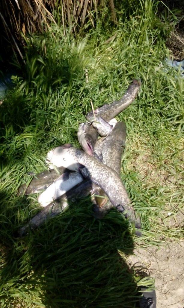 В Ренийском районе браконьеры, удирая от пограничников, бросили прицеп с сетями и 200 кг рыбы