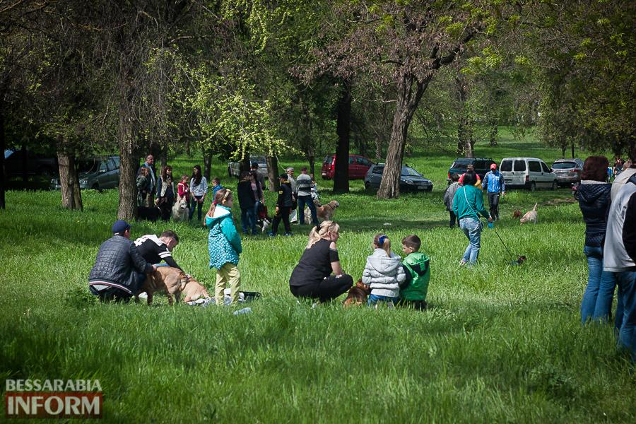 IMG_0441 Полный парк четвероногого счастья: в Измаиле прошел ежегодный племенной смотр собак