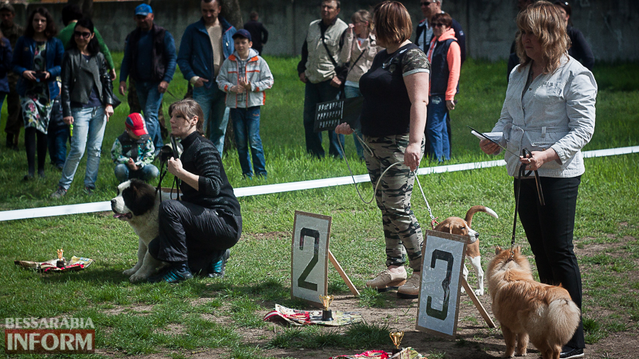 IMG_0451 Полный парк четвероногого счастья: в Измаиле прошел ежегодный племенной смотр собак