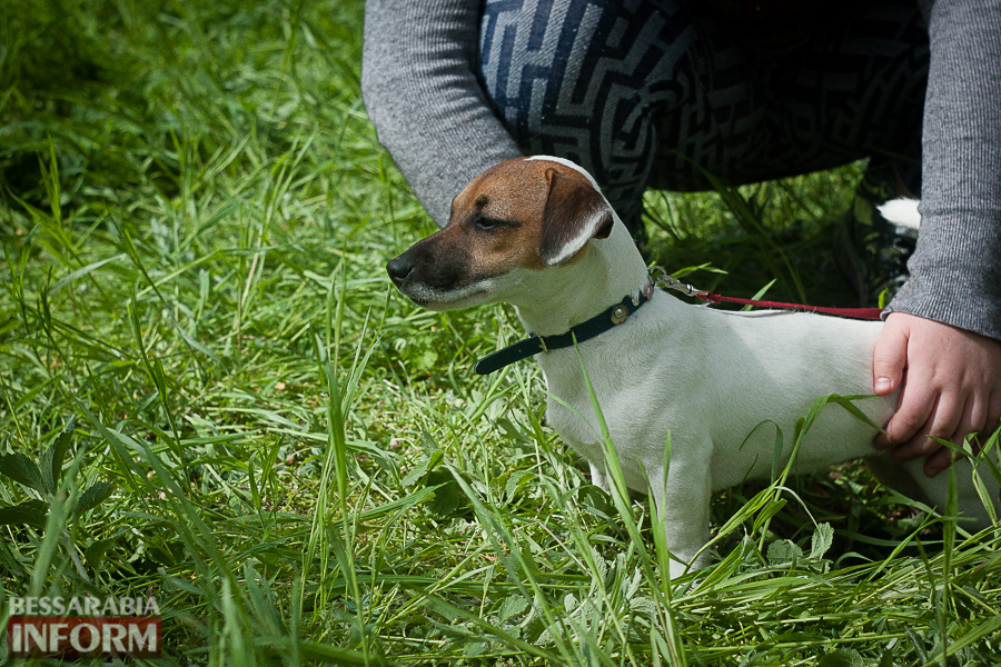 IMG_0452 Полный парк четвероногого счастья: в Измаиле прошел ежегодный племенной смотр собак