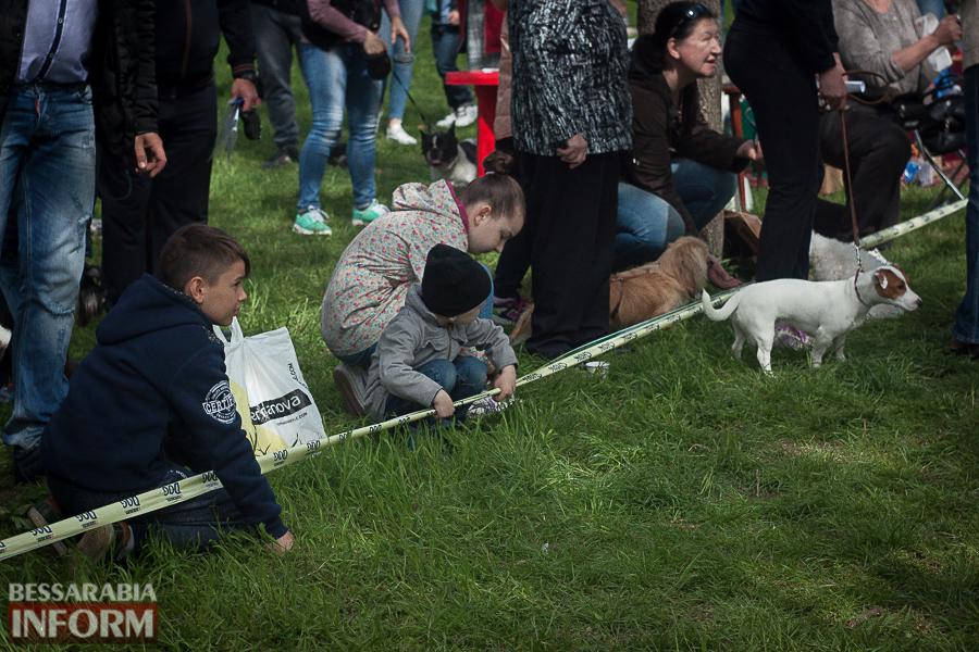 IMG_0453 Полный парк четвероногого счастья: в Измаиле прошел ежегодный племенной смотр собак