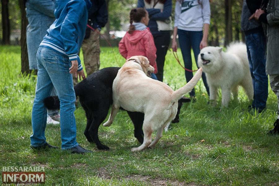IMG_0458 Полный парк четвероногого счастья: в Измаиле прошел ежегодный племенной смотр собак