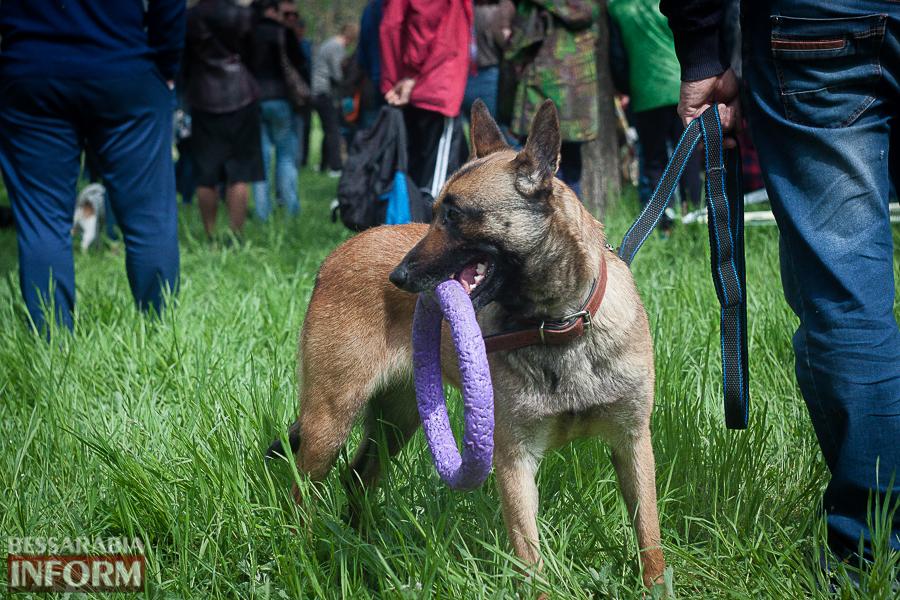 Полный парк четвероногого счастья: в Измаиле прошел ежегодный племенной смотр собак