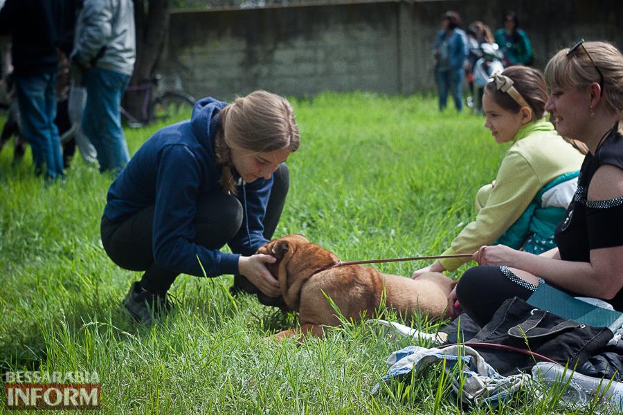 IMG_0464 Полный парк четвероногого счастья: в Измаиле прошел ежегодный племенной смотр собак