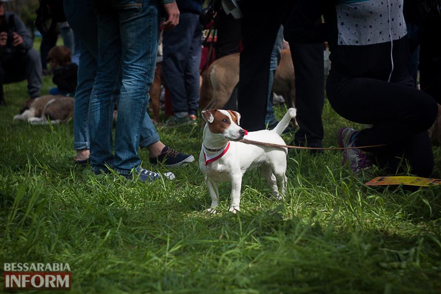 IMG_0469 Полный парк четвероногого счастья: в Измаиле прошел ежегодный племенной смотр собак