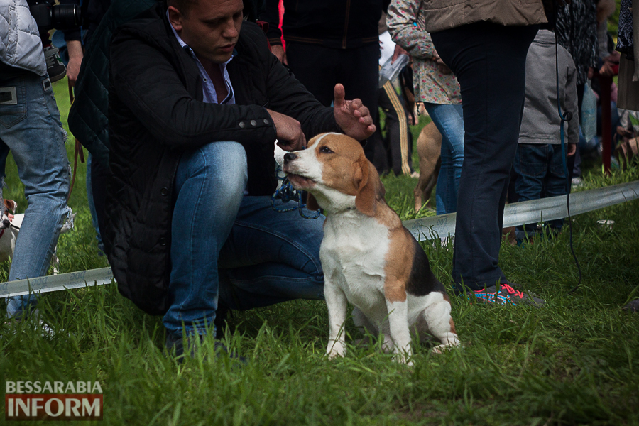 IMG_0470 Полный парк четвероногого счастья: в Измаиле прошел ежегодный племенной смотр собак