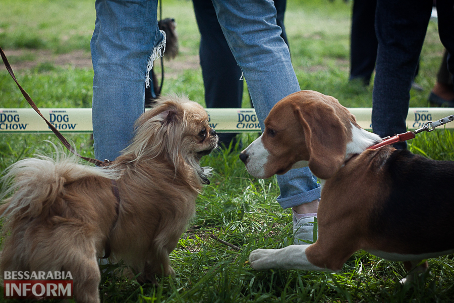 IMG_0485 Полный парк четвероногого счастья: в Измаиле прошел ежегодный племенной смотр собак