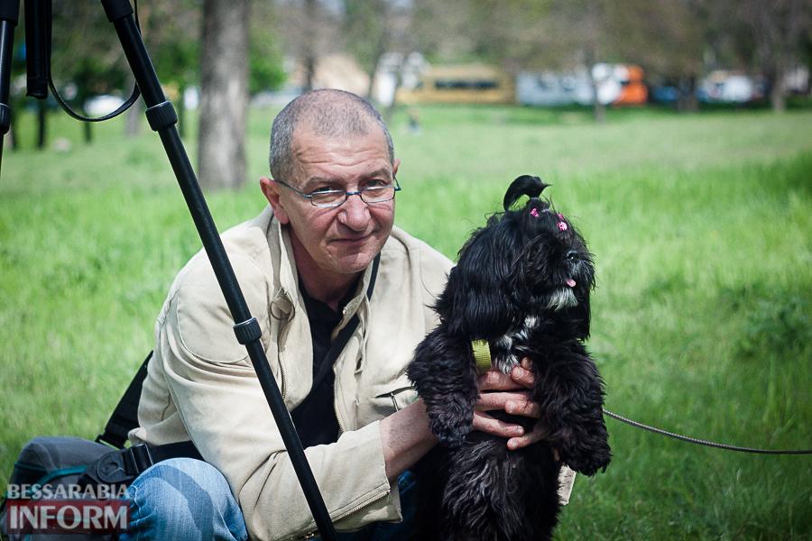 IMG_0489 Полный парк четвероногого счастья: в Измаиле прошел ежегодный племенной смотр собак