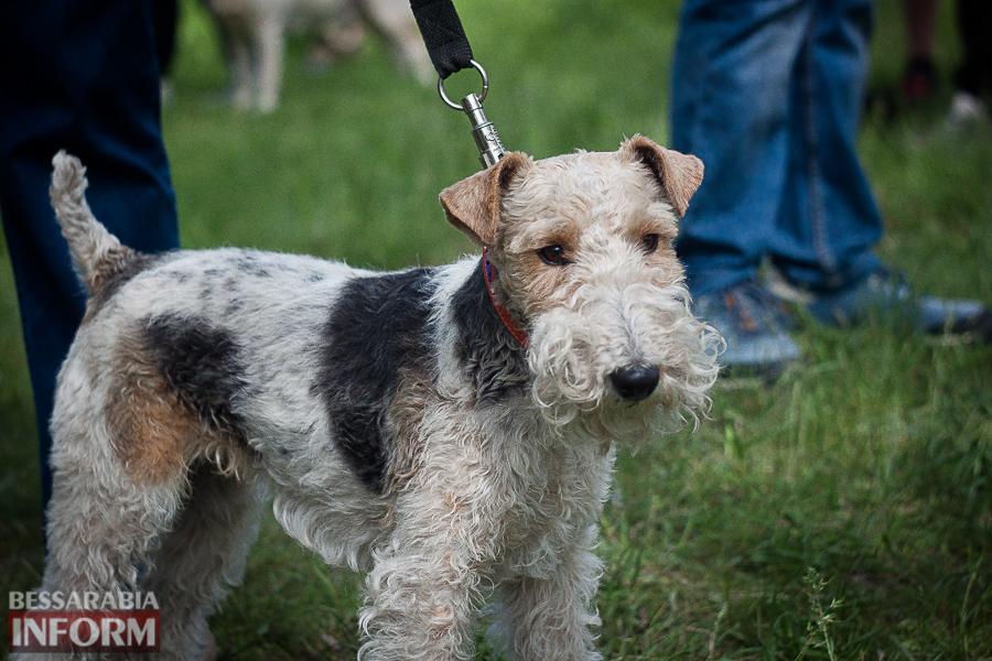 IMG_0497 Полный парк четвероногого счастья: в Измаиле прошел ежегодный племенной смотр собак