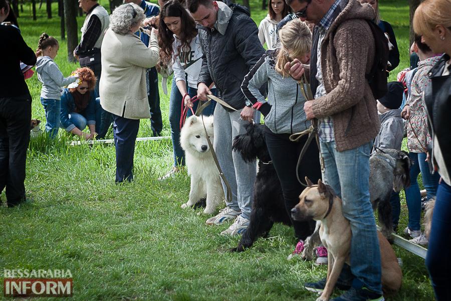 IMG_0506 Полный парк четвероногого счастья: в Измаиле прошел ежегодный племенной смотр собак