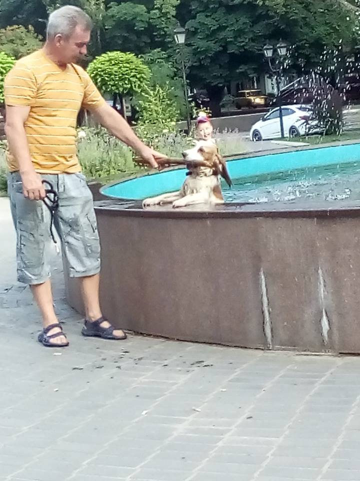 19399476_122103118380825_1864857586483768671_n Фотофакт: житель Измаила искупал собаку в Клушинском фонтане