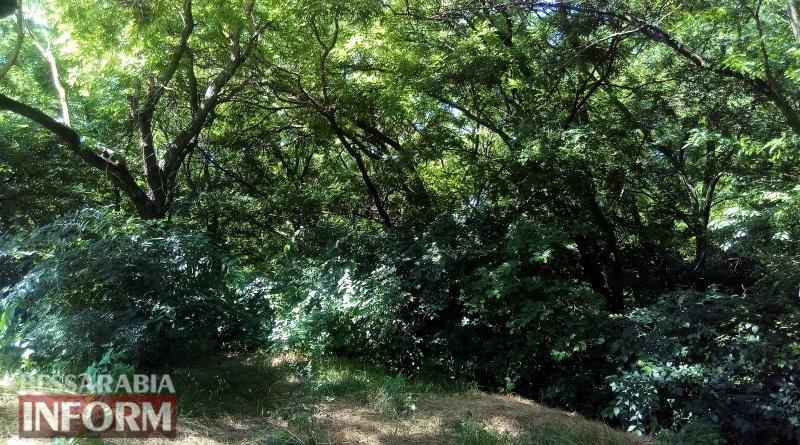 59550c0ac1d95_IMG_20170629_103418 Проекты недалекого будущего: в Измаиле появятся мангальная зона в Крепости и городской пляж на Лебяжьем озере