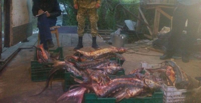 IMG-20170608-WA0000 Кранокнижный улов: в Вилково поймали браконьеров с рыбой ценных пород на 2 млн млн грн