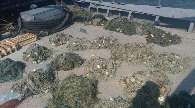 В Килийском районе снова обнаружили погибших в браконьерских сетях дельфинов