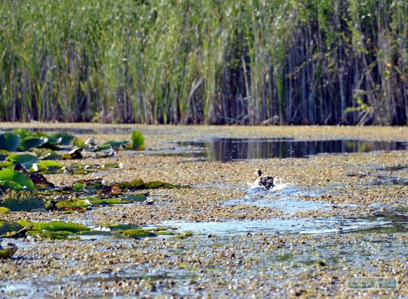 Жители Измаильщины заявили о намерении спасать погибающие придунайские озера