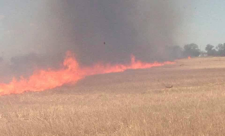 19989297_1364170946972240_5636587709019199351_n В Килийском районе фермеры сжигают стерню вместе с лесопосадками и животными